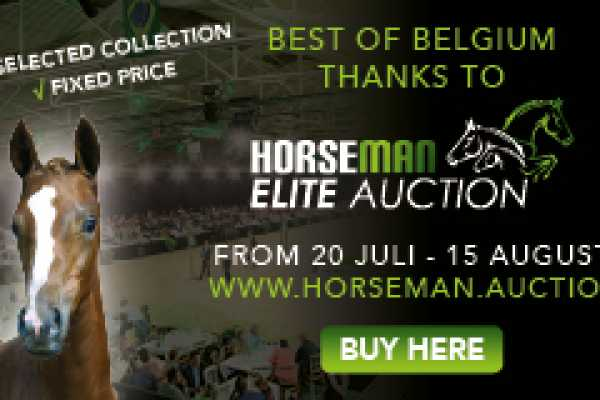 Horseman Elite Auction - Marktplaats